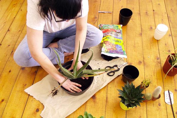 gardening mama jardinage appartement olamelama image 1