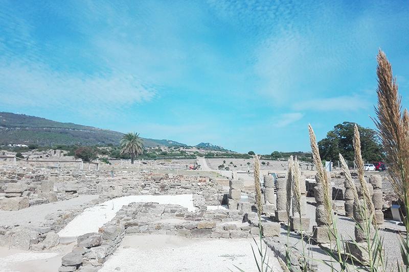 Roadtrip - Bolonia - Lamas on the road - Olamelama blog