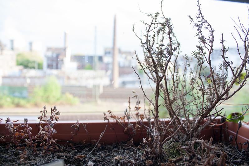 Plante morte - Olamelama
