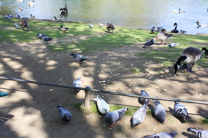 Dimanche printanier à Düsseldorf - Pigeons du Hofgarten - Olamelama