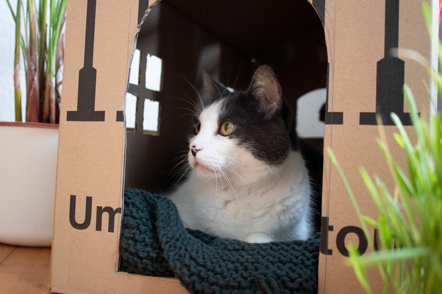 Adoption d'un chat en Allemagne - Témoignage - Hippo dans sa maison en carton