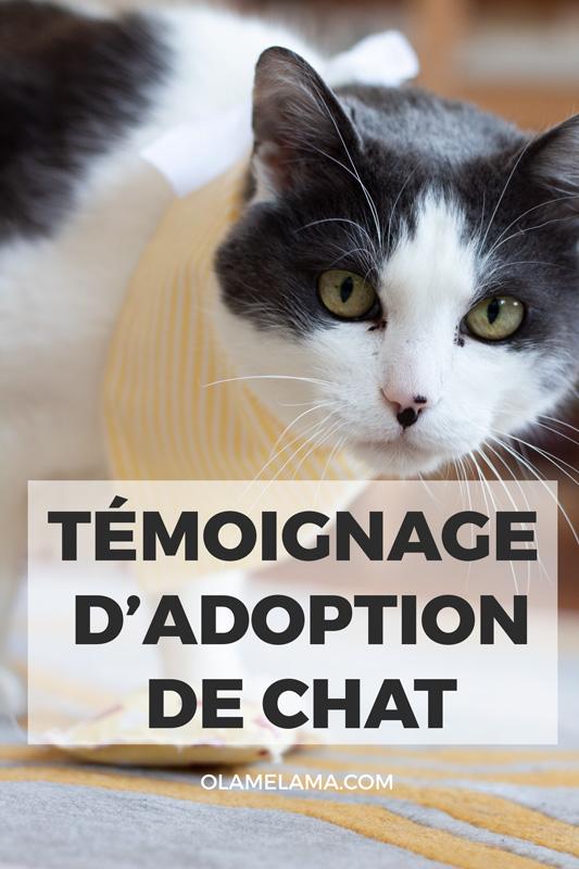 Adoption d'un chat en Allemagne - Témoignage - Pinterest