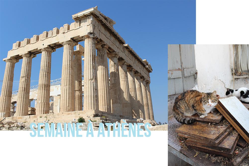 Lama Diaries #32 - Février 2019 - Semaine à Athènes